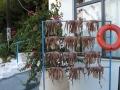 Frauen Segeln: Oktopus zum trocknen aufgehängt